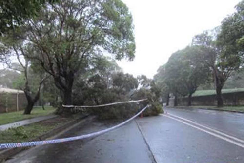 Disaster assistance for Hunters Hill
