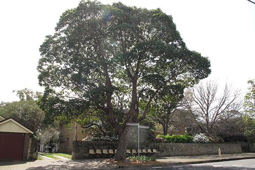 Significant Tree Register – Call for nominations